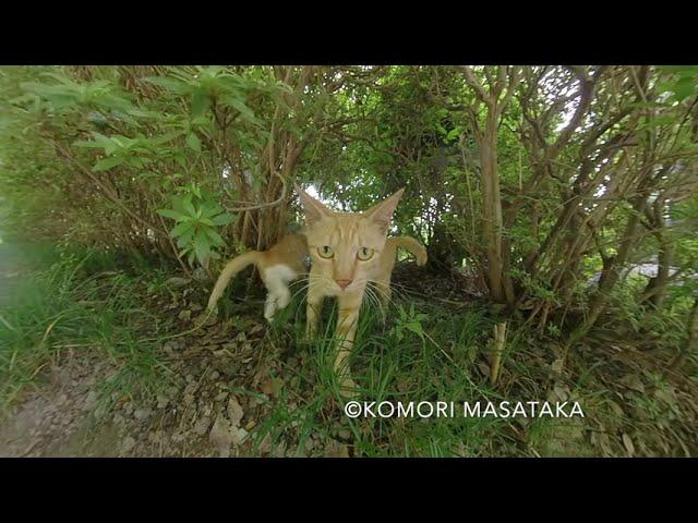 好奇心な母猫