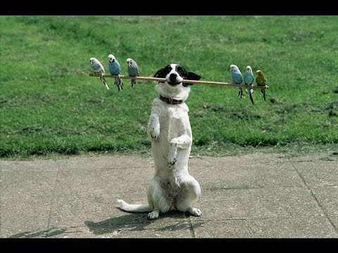 Собака которая умеет всё. Команды, трюки. Профессия кинолог, дрессировка собак в домашних условиях.