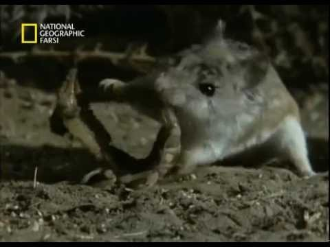 V Mouse Eating Scene Battle of Mouse with T...
