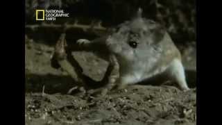 видео battle-mouse