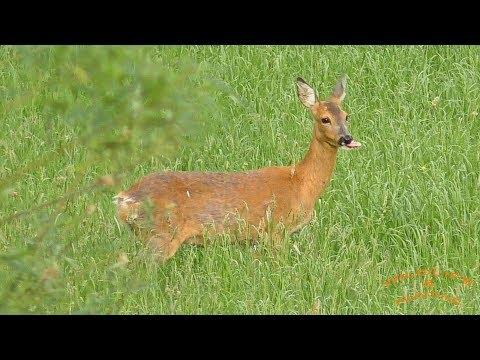 Wildlife and Hunting Bavaria Deer and Rabbit