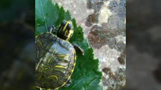 у нас умерла черепаха