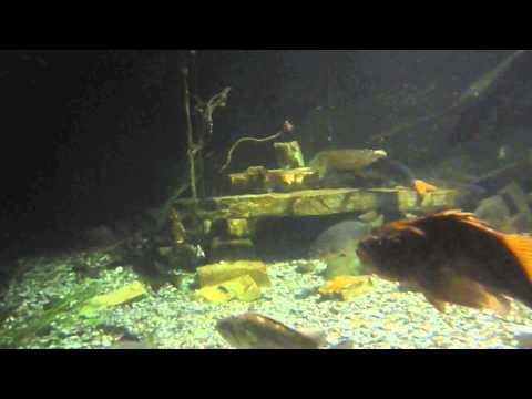 Amazing Undersea Live Theater - Aquarium, Undersea Gardens - Newport, Oregon, USA
