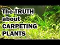 The TRUTH about Aquarium Carpeting Plants