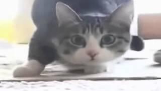 Кот танцует  вего вего.