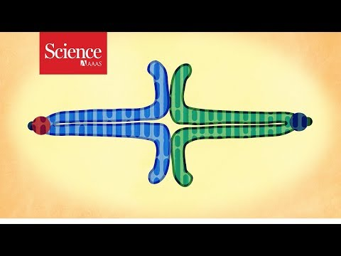 How Selfish DNA Hijacks Its Way Into Egg Cells