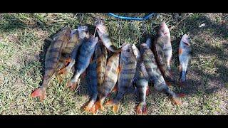 Отличная рыбалка на окуня нарезки Часть 2