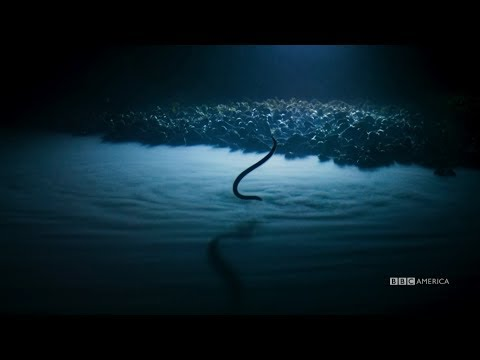 Brine Pools | Planet Earth: Blue Planet II | Saturdays @ 9/8c on BBC America