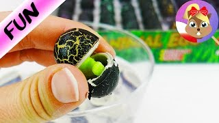 60 jajek niespodzianek ze zwierzętami | Test na żywo