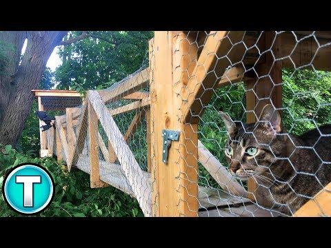 World's Best Outdoor Cat Enclosure