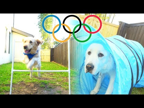 THE DOG OLYMPICS! (Super Cooper Sunday #133)