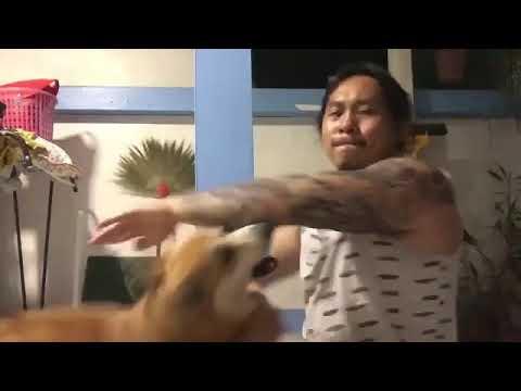 Brian Price - WATCH: Kung Fu Corgi