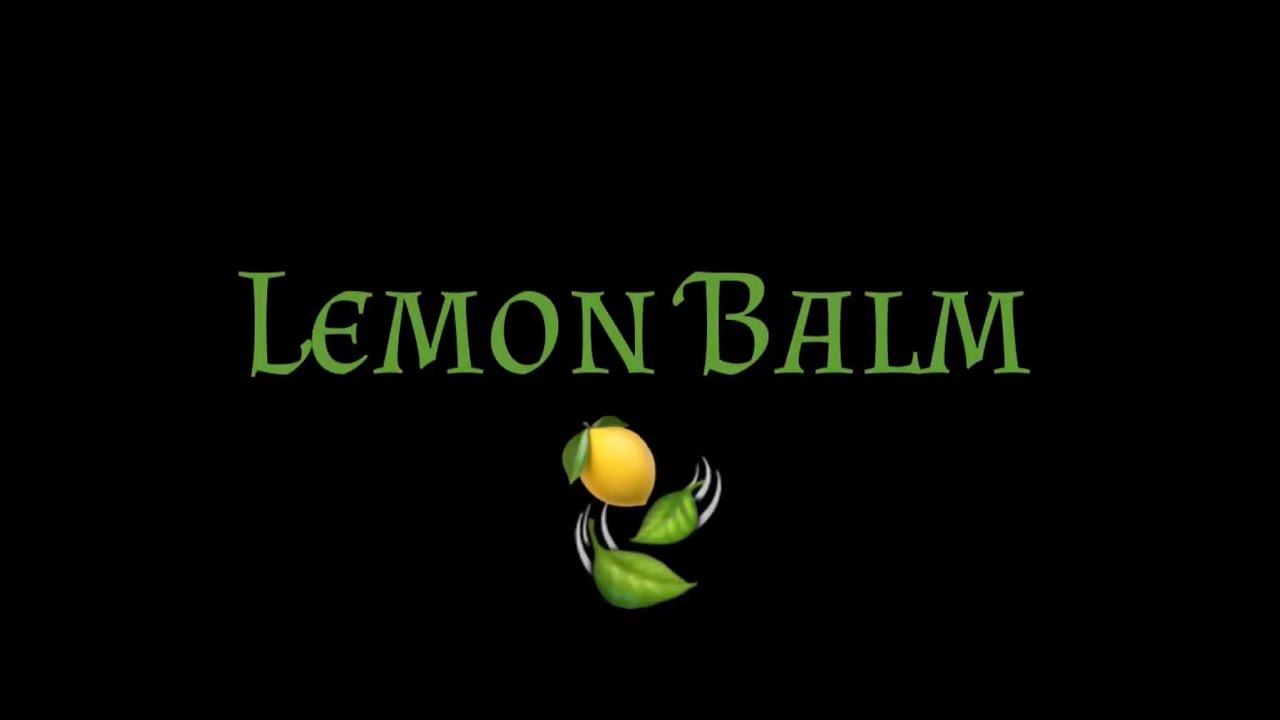 All About Lemon Balm And Making Lemon Balm Pesto