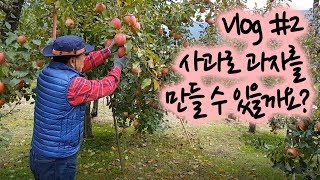일상 Vlog #2   은퇴 후 시골일상 (사과🍎/ 사과칩 만들기 )