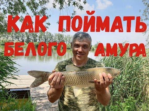 Ловля белого амура / Рыбалка 01.06.2019