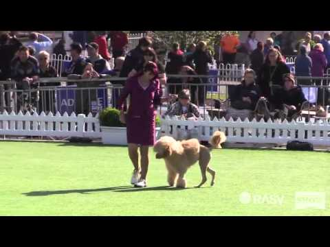 2015 Best In Show Dogs - 2015 Royal Melbourne Show All Breeds Dog Championship