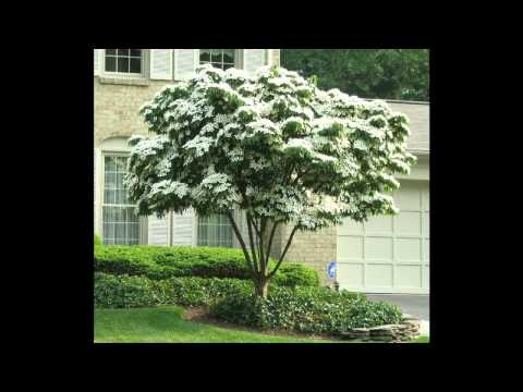 Small shade trees for patio