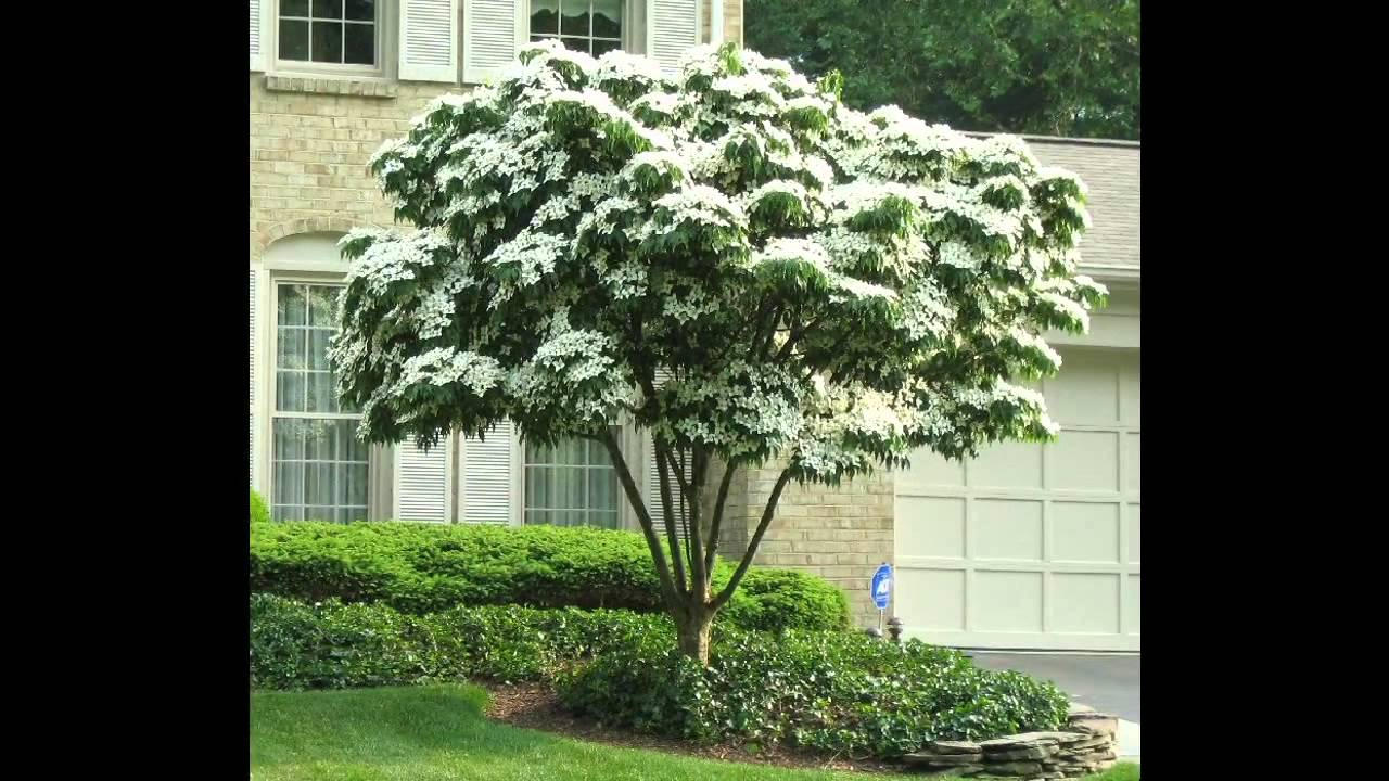 Small Shade Trees For Patio You