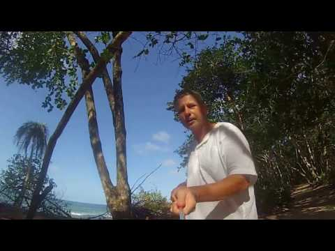 Walk in Cahuita National Park and the beach, Talamanca, Costa Rica