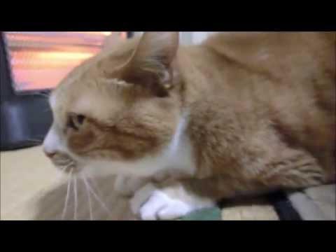 お尻トントンが好きな猫