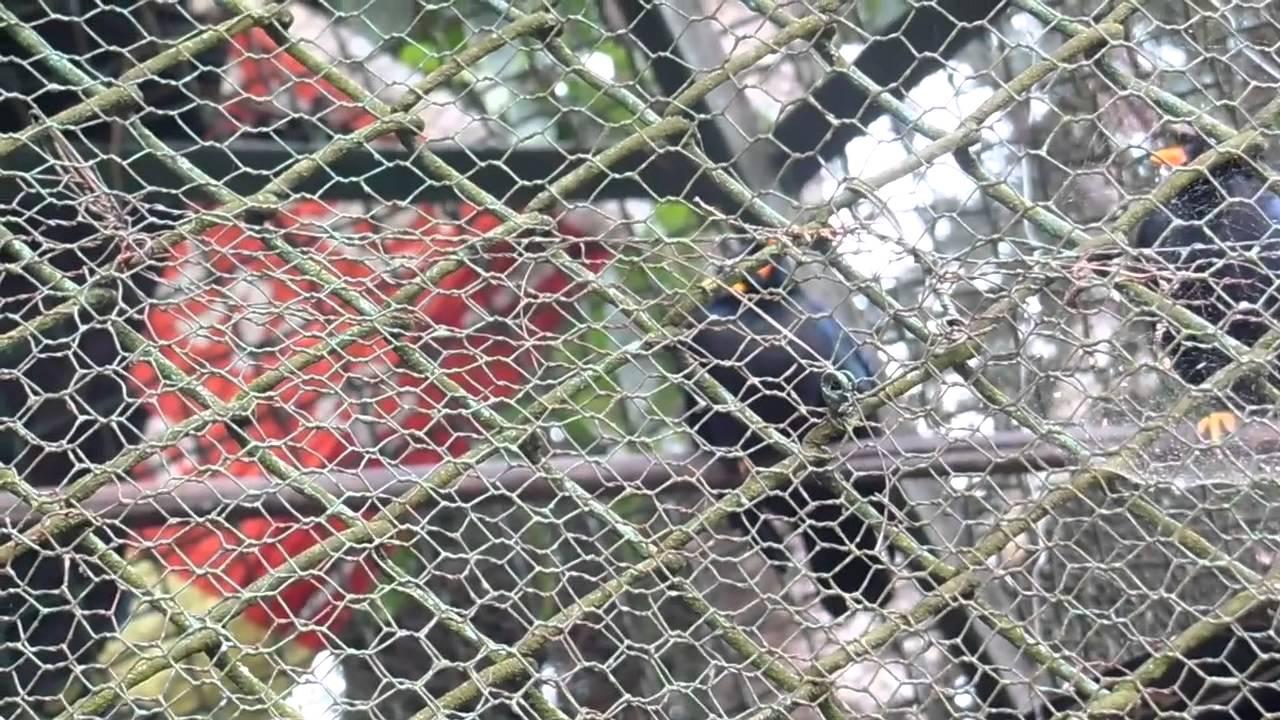 Talking with Meghalaya birds in Shillong - YouTube
