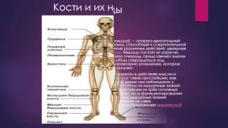 Организм человека презентация
