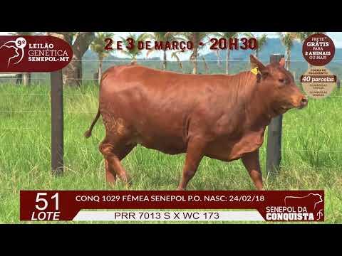 LOTE 51 CONQ 1029