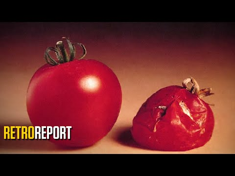 GMO Food Fears and the First Test Tube Tomato | Retro Report