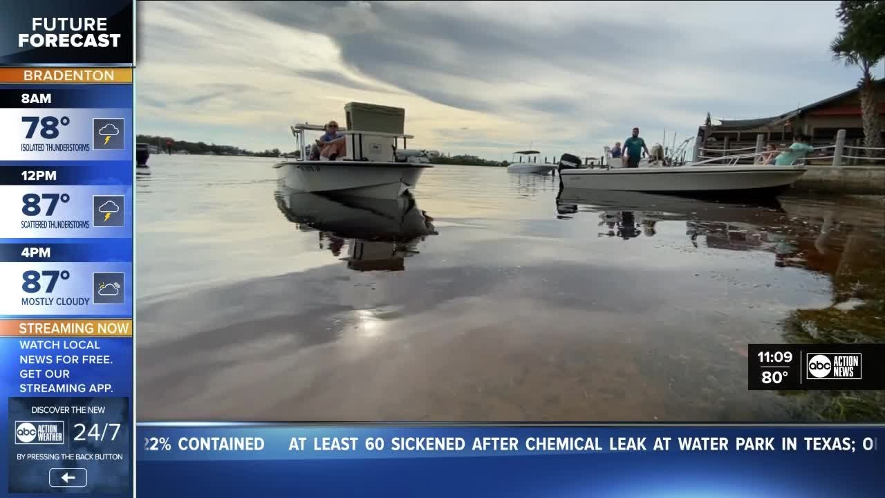 Scallop season gets underway in Pasco County, FWC recommends ...