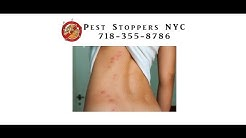 Bed Bug Exterminator Bronx NY - Bed Bug Treatment