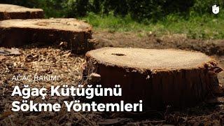 Ağaç Kütüğünü Sökme Yöntemleri