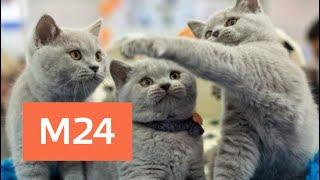 Выставка необычных кошек началась в Москве - Москва 24