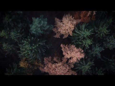 eine-klimabilanz:-wie-grün-ist-der-weihnachtsbaum?