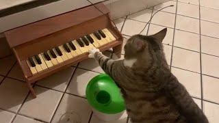 Clever Cat Plays Piano When Its Hungry