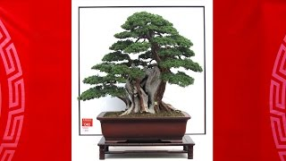Visions of China Bonsai/Penjing: The China Zuni– 2014 In Yuyao City.