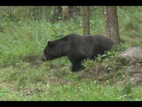 menonton-beruang-jadi-tren-besar-di-estonia