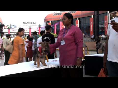 Dogs gather socially in Delhi, poop scooper works quietly in background