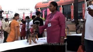 Dogs Get To Gather In Delhi