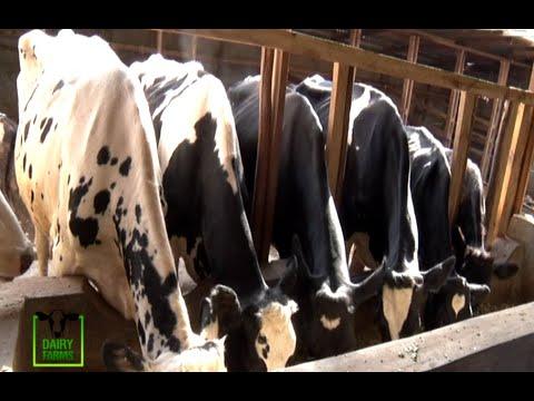 A 12 Year success dairy farming story - Dairy farms