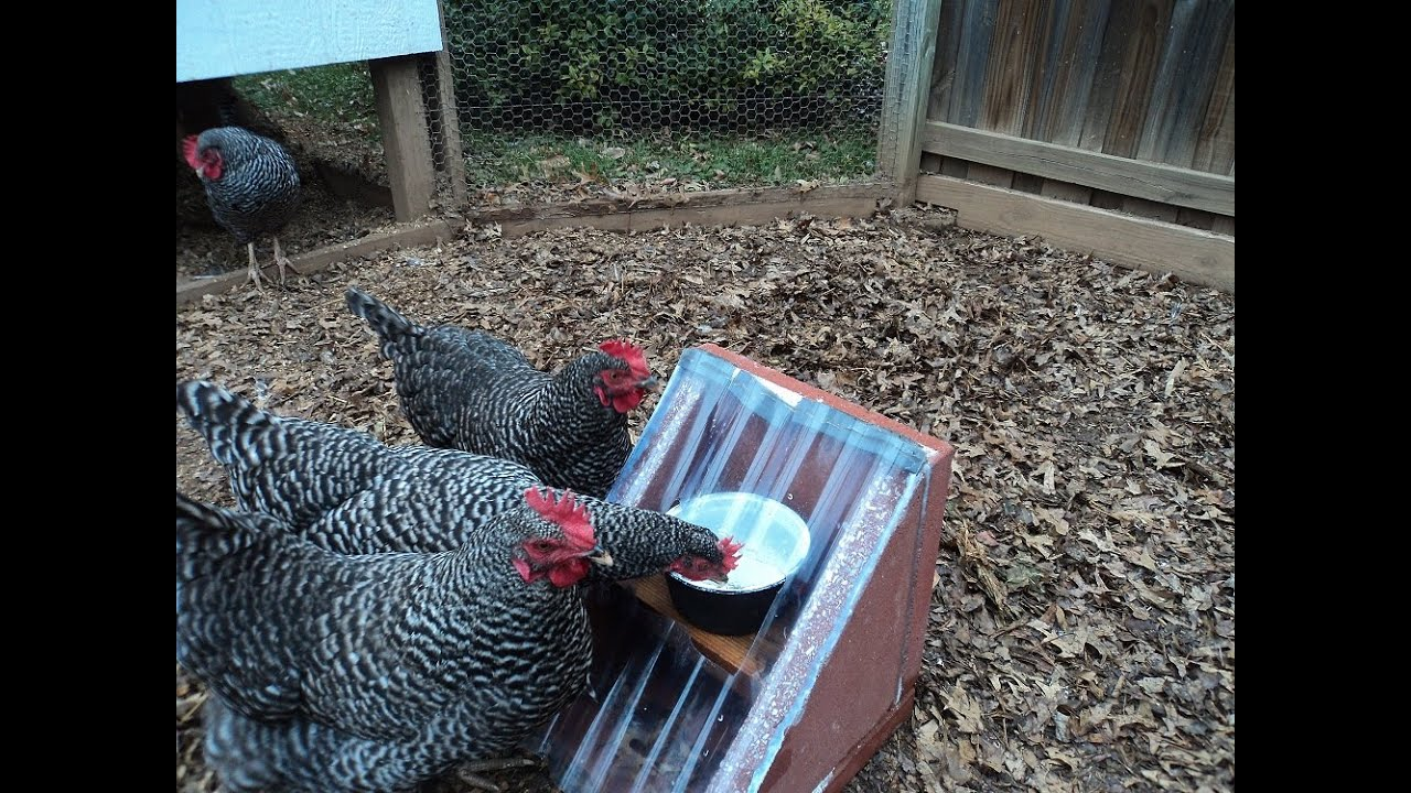 Solar Heated Chicken Waterer Youtube