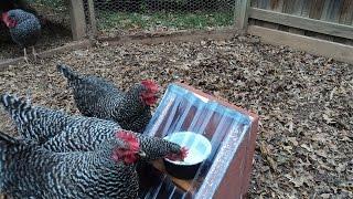Solar Heated Chicken Waterer