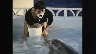 Teaching a dolphin to speak English - The Girl Who Talked to Dolphins: Preview - BBC Four thumbnail