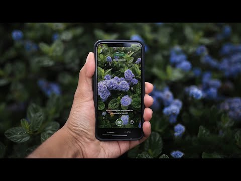 Seek app lets users identify plant and animal species in real time