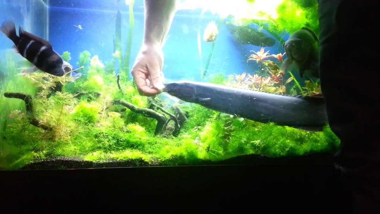 me feeding elmo the fire 22inch monster eel