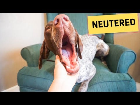 Dog neutering/spay experience