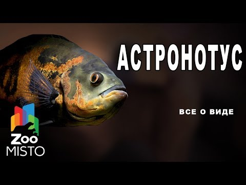 Вопрос: Какие рыбы относятся к семейству окуневых?