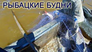 Рыбацкие Будни Рыбалка Сетями на АМУРЕ Лов Сазана