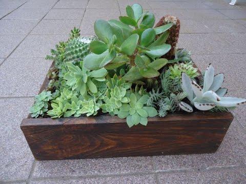 Composizione di piante grasse succulente 1 youtube for Piante grasse da giardino perenni