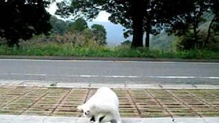 公園の猫.