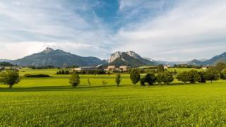Zeitraffervideo Narzissen Bad Aussee